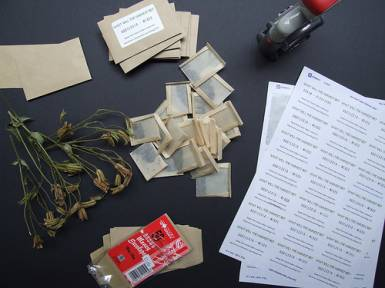 Work on the seed packets for the project