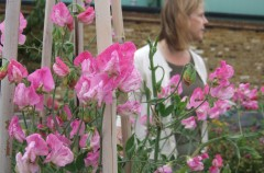 Sweet Pea 'Blanche Ferry' planted by Vicky